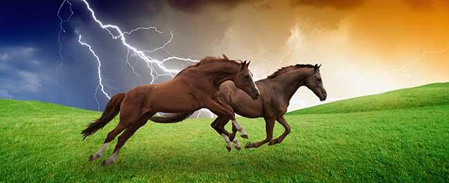 How Lightning Strikes Kill Animals
